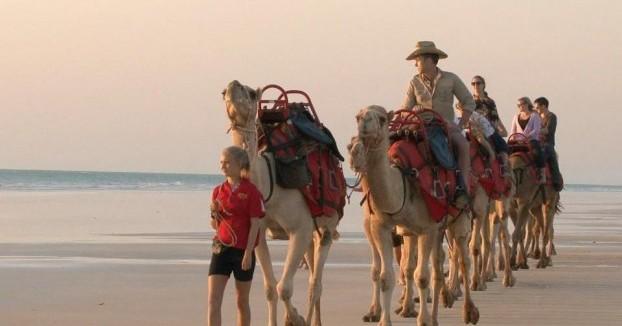 Camels-e1408934225908
